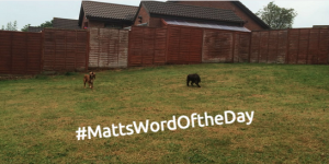 #MattsWordOfTheDay Part 3