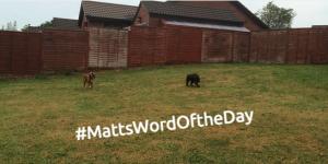 #MattsWordOfTheDay Part 3