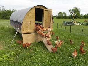 House sitting in Devon for the chickens